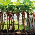 PLANTS EN POTS